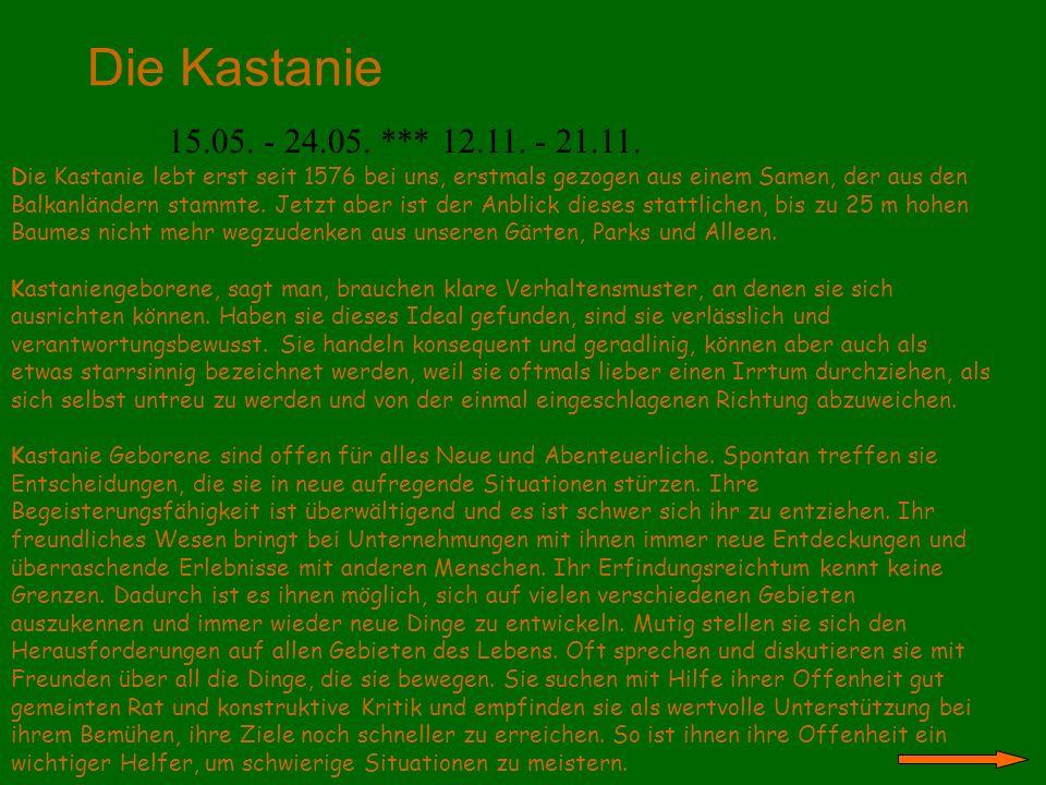 Die Kastanie 15.05. - 24.05. *** 12.11. - 21.11. Die Kastanie lebt erst seit 1576 bei uns, erstmals gezogen aus einem Samen, der aus den Balkanländern