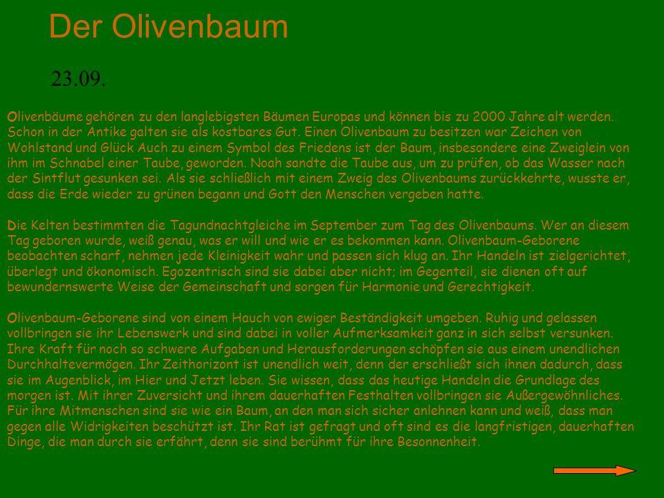 Der Olivenbaum 23.09. Olivenbäume gehören zu den langlebigsten Bäumen Europas und können bis zu 2000 Jahre alt werden. Schon in der Antike galten sie