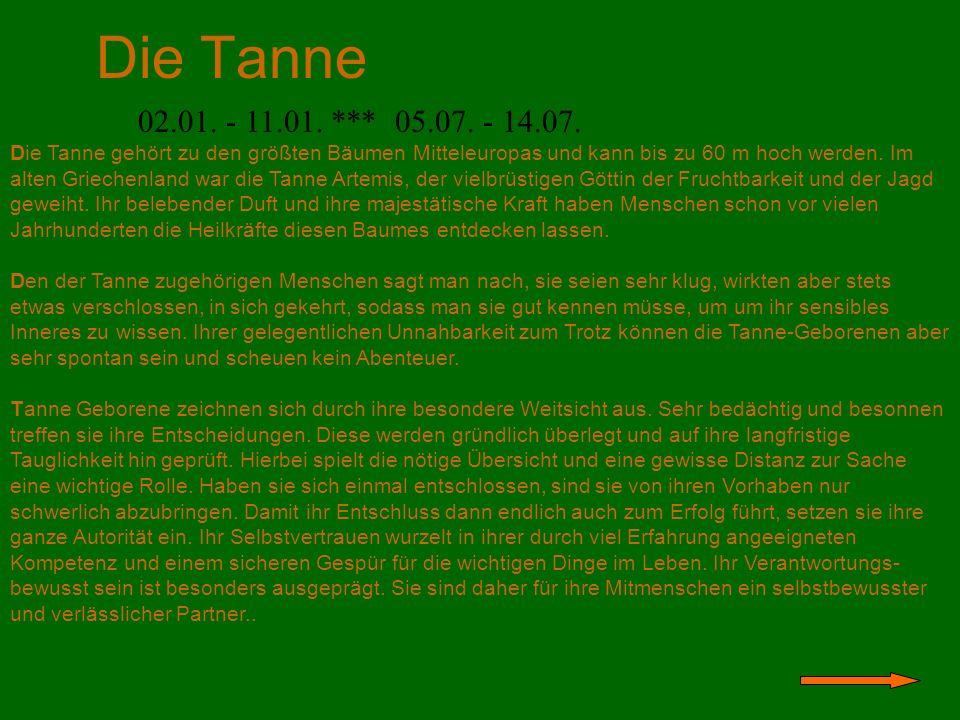 Der Ahorn 11.04.– 20.04. *** 14.10. – 23.10.