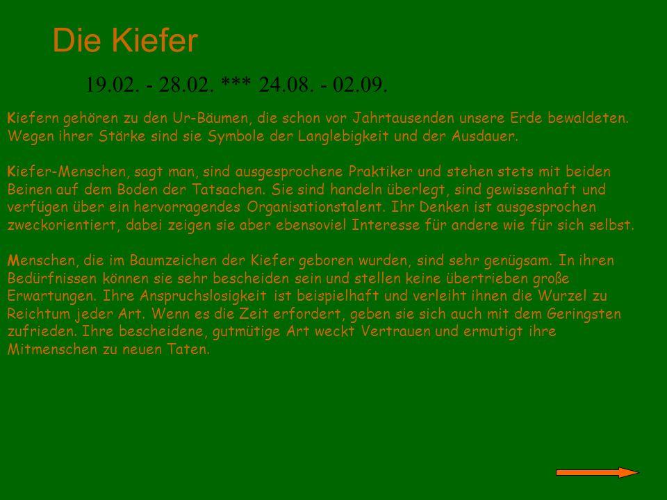 Der Weidenbaum 01.03.- 10.03. *** 03.09. - 12.09.
