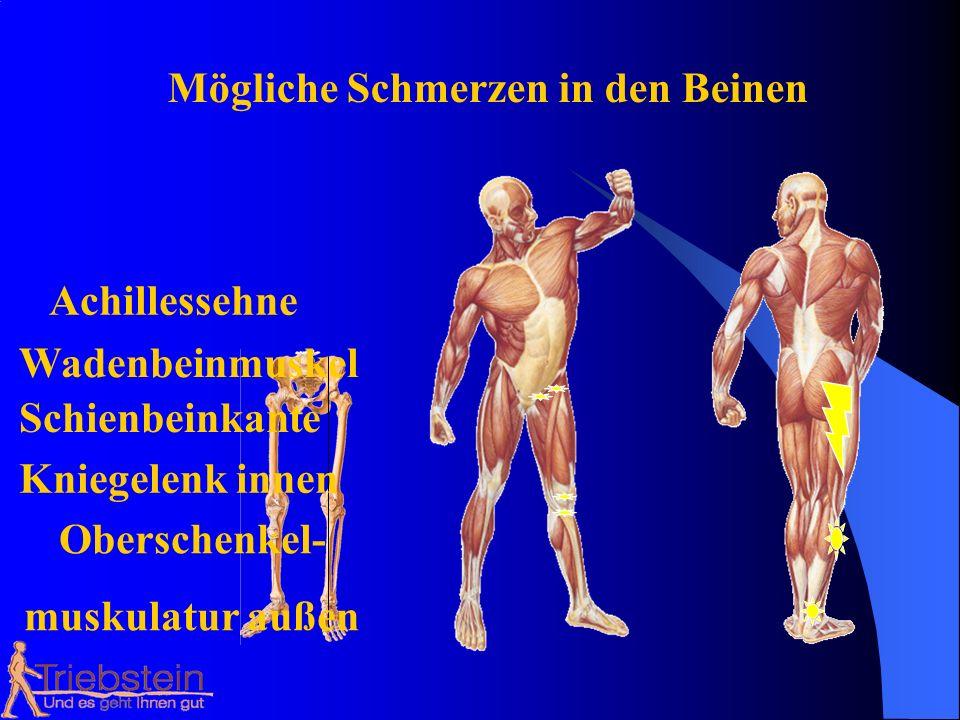 Mögliche Schmerzen in den Beinen Achillessehne Wadenbeinmuskel Schienbeinkante Kniegelenk innen Oberschenkel- muskulatur außen