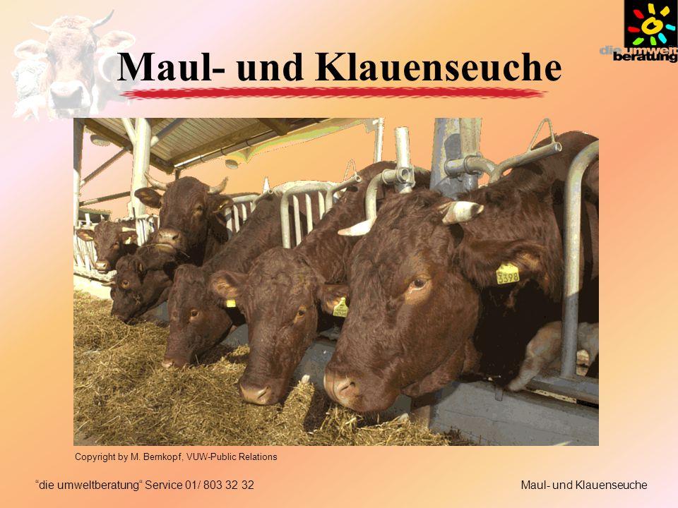 Maul- und Klauenseuchedie umweltberatung Service 01/ 803 32 32 Maul- und Klauenseuche Copyright by M. Bernkopf, VUW-Public Relations