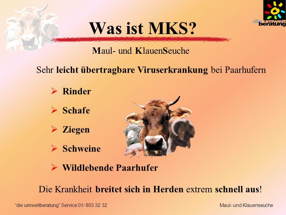 Was ist MKS? Sehr leicht übertragbare Viruserkrankung bei Paarhufern Rinder Schafe Ziegen Schweine Wildlebende Paarhufer Die Krankheit breitet sich in
