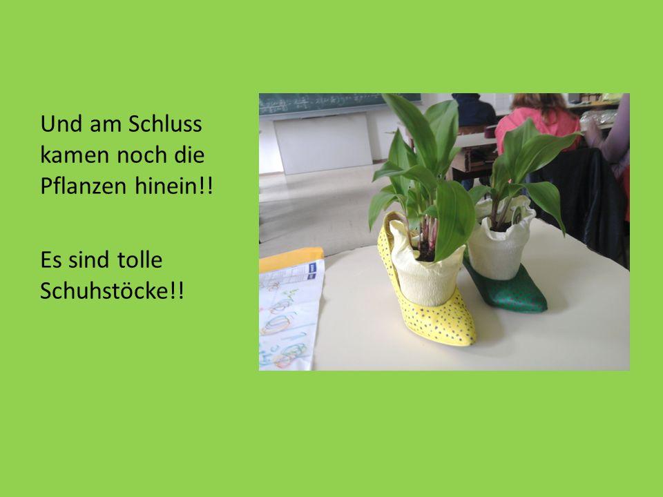 Und am Schluss kamen noch die Pflanzen hinein!! Es sind tolle Schuhstöcke!!