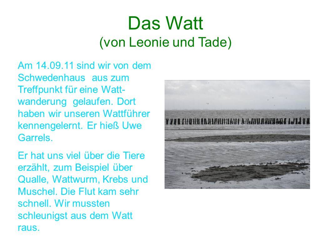 Das Watt (von Leonie und Tade) Am 14.09.11 sind wir von dem Schwedenhaus aus zum Treffpunkt für eine Watt- wanderung gelaufen. Dort haben wir unseren