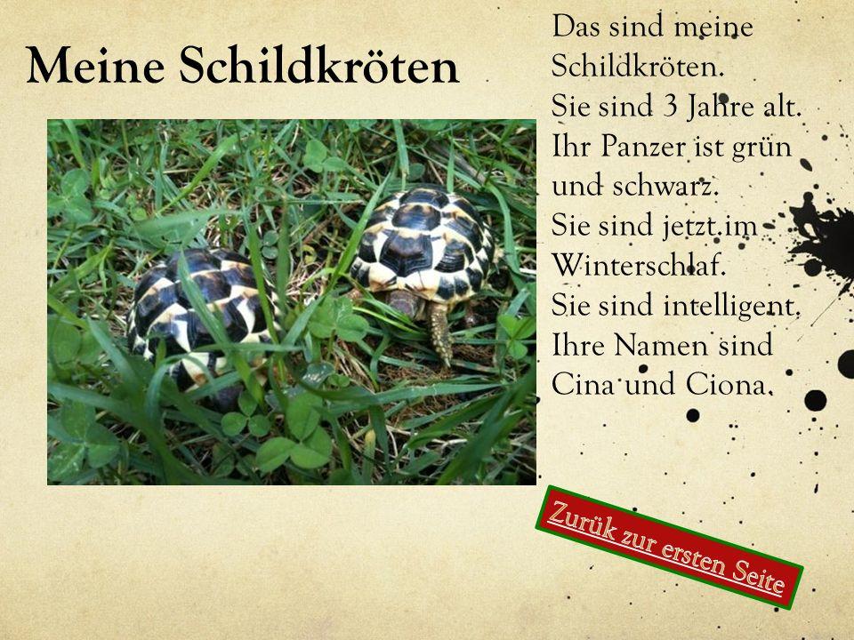 Meine Schildkröten Das sind meine Schildkröten. Sie sind 3 Jahre alt. Ihr Panzer ist grün und schwarz. Sie sind jetzt.im Winterschlaf. Sie sind intell