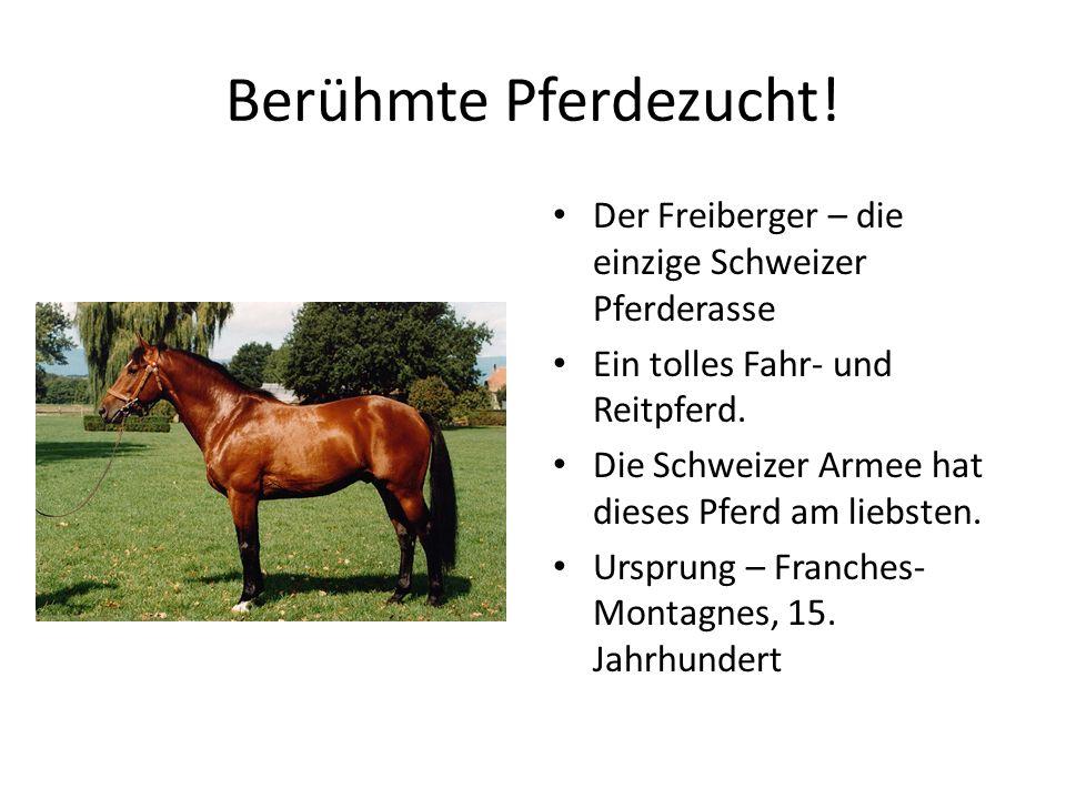 Berühmte Pferdezucht! Der Freiberger – die einzige Schweizer Pferderasse Ein tolles Fahr- und Reitpferd. Die Schweizer Armee hat dieses Pferd am liebs