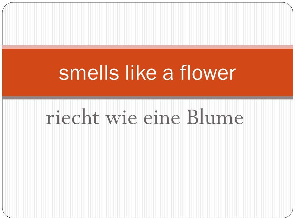 riecht wie eine Blume smells like a flower