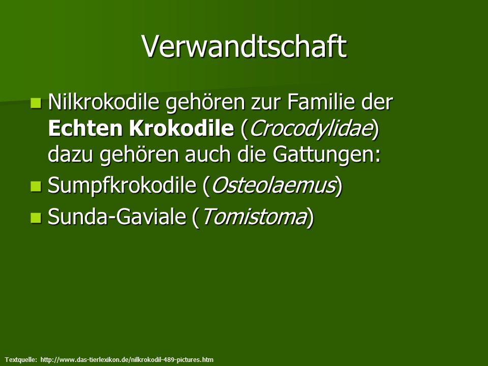 Verwandtschaft Nilkrokodile gehören zur Familie der Echten Krokodile (Crocodylidae) dazu gehören auch die Gattungen: Nilkrokodile gehören zur Familie