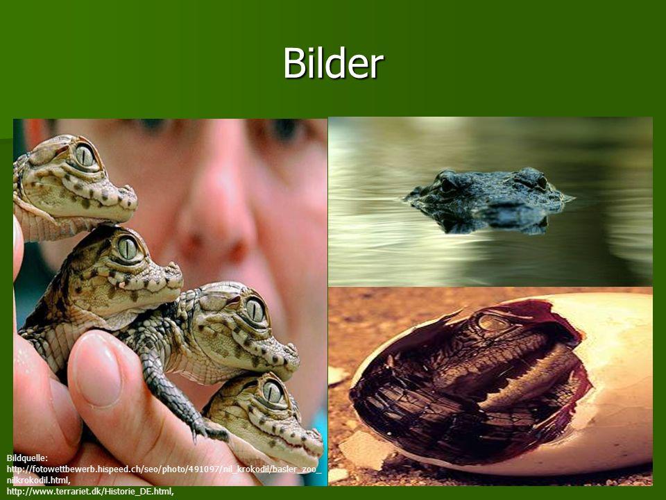 Bilder Bildquelle: http://fotowettbewerb.hispeed.ch/seo/photo/491097/nil_krokodil/basler_zoo_ nilkrokodil.html, http://www.terrariet.dk/Historie_DE.ht