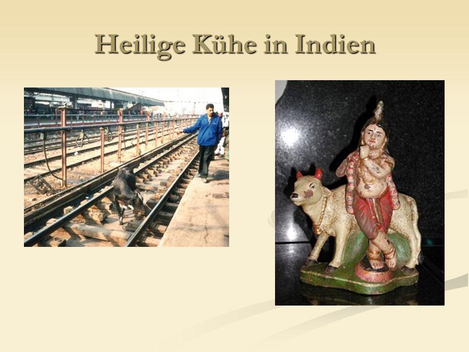 Heilige Kühe in Indien