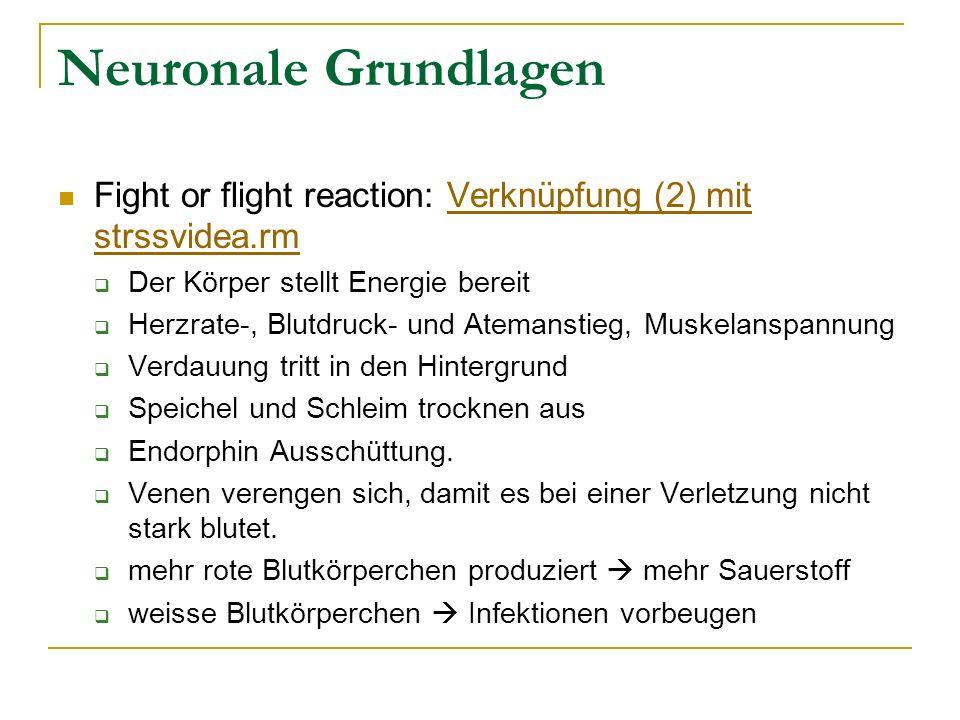 Neuronale Grundlagen Fight or flight reaction: Verknüpfung (2) mit strssvidea.rmVerknüpfung (2) mit strssvidea.rm Der Körper stellt Energie bereit Her
