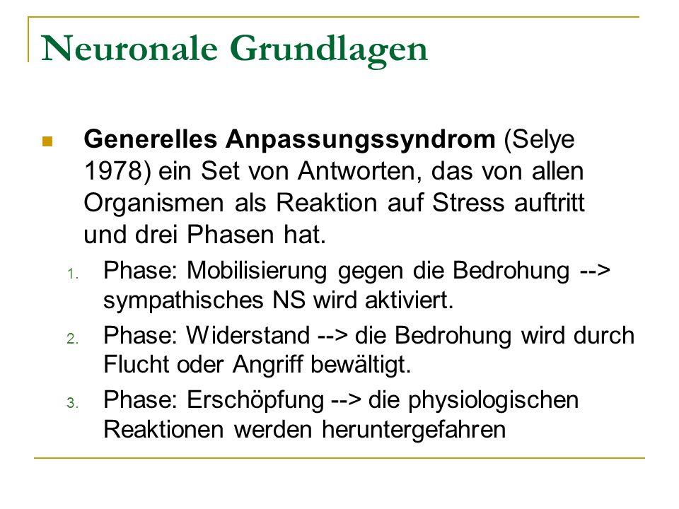 Neuronale Grundlagen Generelles Anpassungssyndrom (Selye 1978) ein Set von Antworten, das von allen Organismen als Reaktion auf Stress auftritt und dr