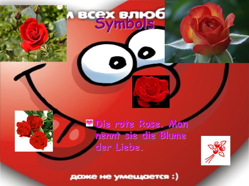 Symbols Die rote Rose. Man nennt sie die Blume der Liebe.