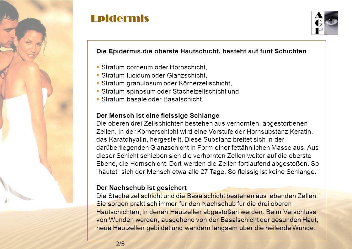 Epidermis Die Epidermis,die oberste Hautschicht, besteht auf fünf Schichten Stratum corneum oder Hornschicht, Stratum lucidum oder Glanzschicht, Strat
