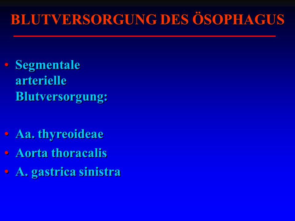 BLUTVERSORGUNG DES ÖSOPHAGUS Segmentale arterielle Blutversorgung: Aa.
