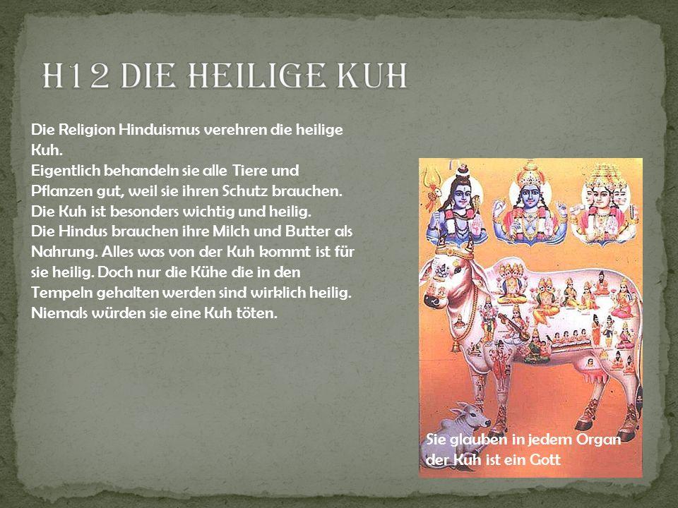 Die Religion Hinduismus verehren die heilige Kuh. Eigentlich behandeln sie alle Tiere und Pflanzen gut, weil sie ihren Schutz brauchen. Die Kuh ist be