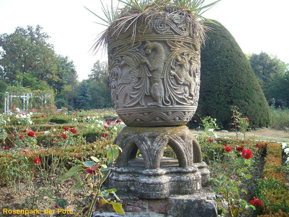 Rosenpark mit Blick auf die Kathedrale