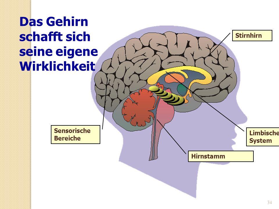 34 Limbisches System Stirnhirn Sensorische Bereiche Hirnstamm Das Gehirn schafft sich seine eigene Wirklichkeit