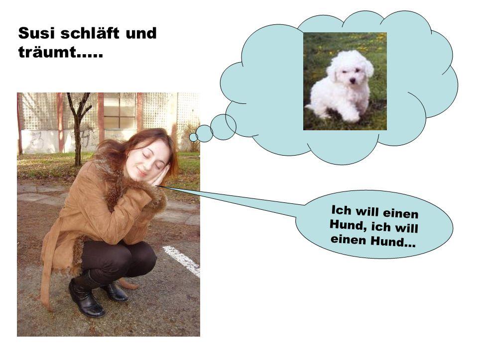Ich will einen Hund, ich will einen Hund... Susi schläft und träumt.....