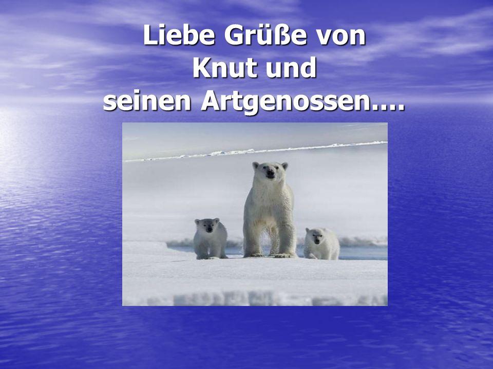Liebe Grüße von Knut und seinen Artgenossen....