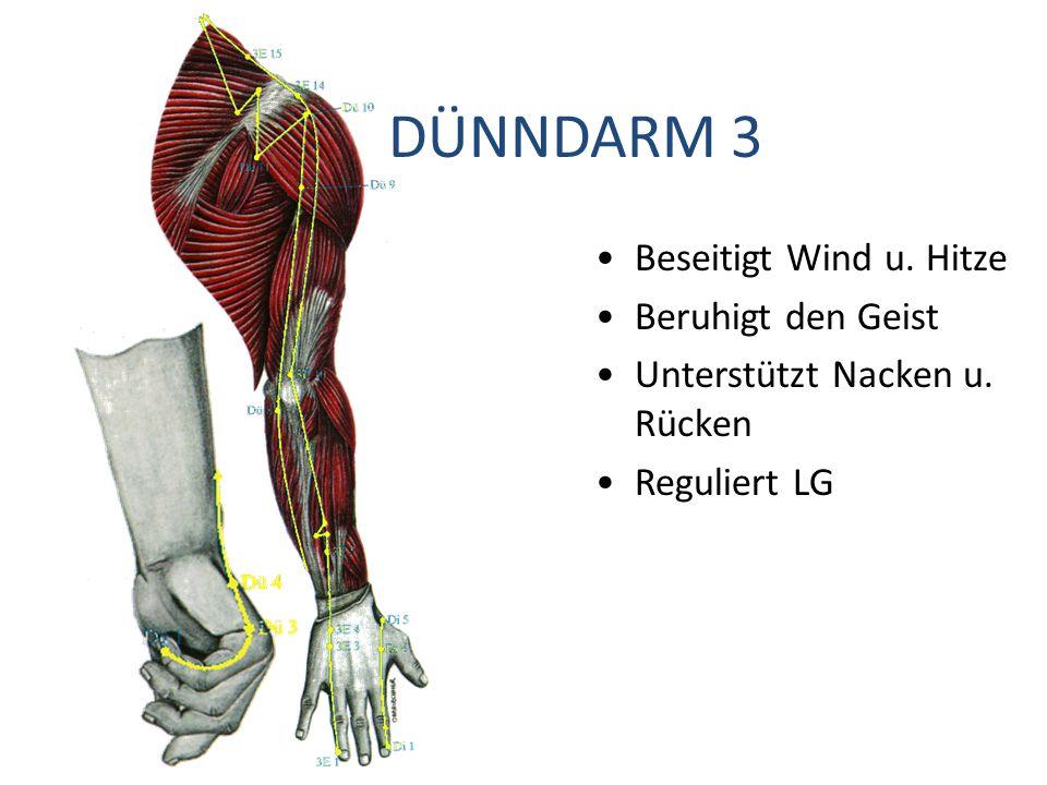 DÜNNDARM 3 Beseitigt Wind u. Hitze Beruhigt den Geist Unterstützt Nacken u. Rücken Reguliert LG