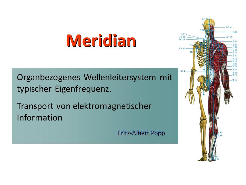 Meridian Fritz-Albert Popp Organbezogenes Wellenleitersystem mit typischer Eigenfrequenz. Transport von elektromagnetischer Information