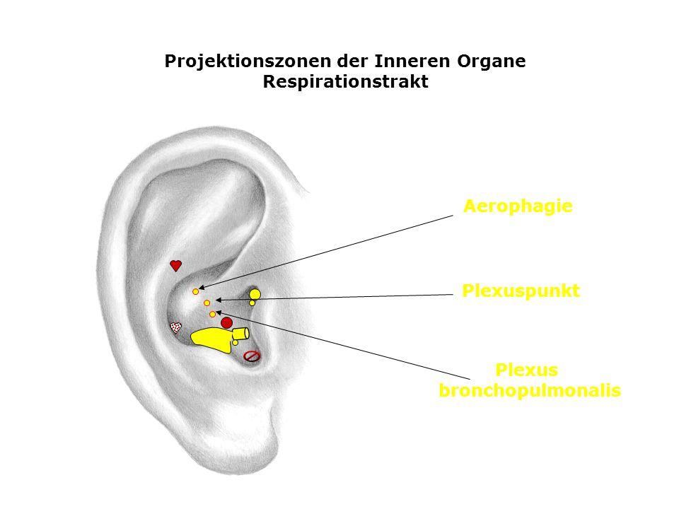 Projektionszonen der Inneren Organe Respirationstrakt Aerophagie Plexuspunkt Plexus bronchopulmonalis