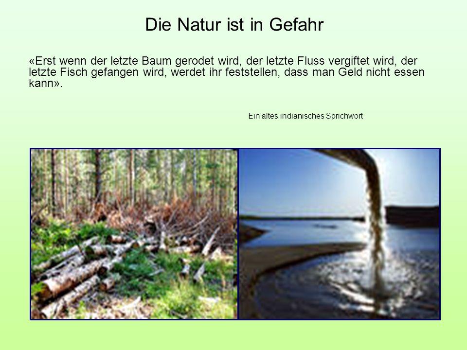 Die Natur ist in Gefahr «Erst wenn der letzte Baum gerodet wird, der letzte Fluss vergiftet wird, der letzte Fisch gefangen wird, werdet ihr feststell