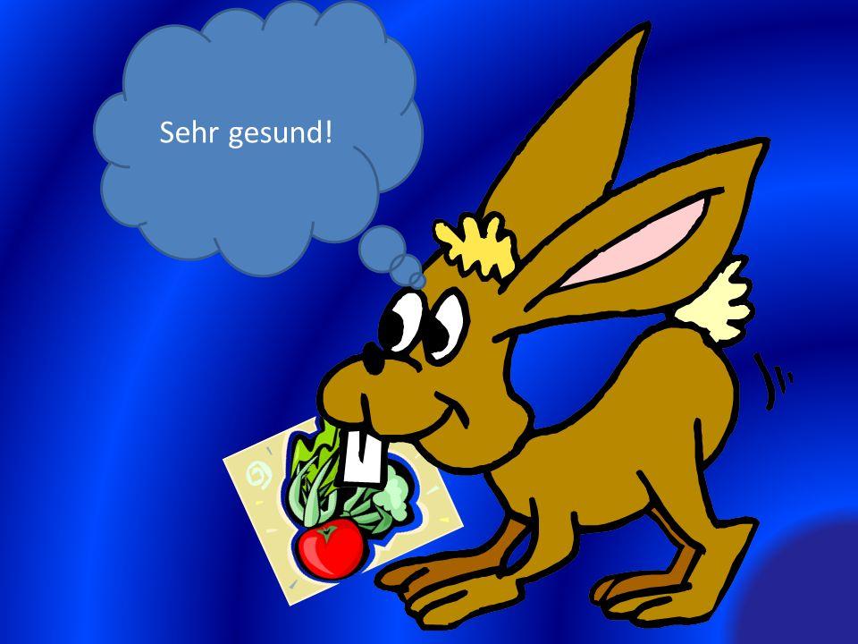 Was hat das Kaninchen gegessen