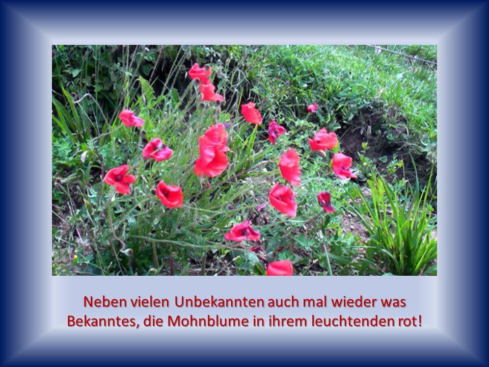 Am Rande der Felder, die in ihrem ursprünglichen Zustand erhalten sind, kann man hier noch viele unbekannte Blumen und Pflanzen entdecken.