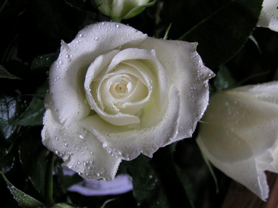 seinem Ehepartner tief in die Seele schauen und ihm sagen: Ich liebe dich von ganzem Herzen; Er wartet nicht bis der Tod sie scheidet, denn dann ist e