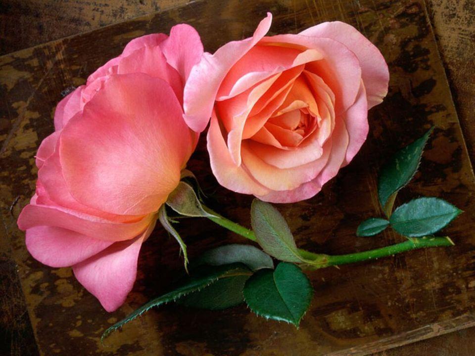 Liebe üben… Das sind keine große Reden, sondern kleine, einfache Sachen, manchmal bedeutungslos…