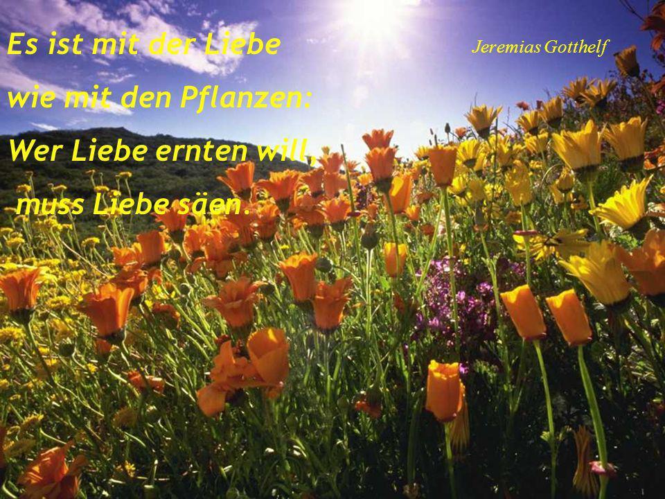 Auch aus Steinen, die in den Weg gelegt werden, kann man Schönes bauen. Goethe