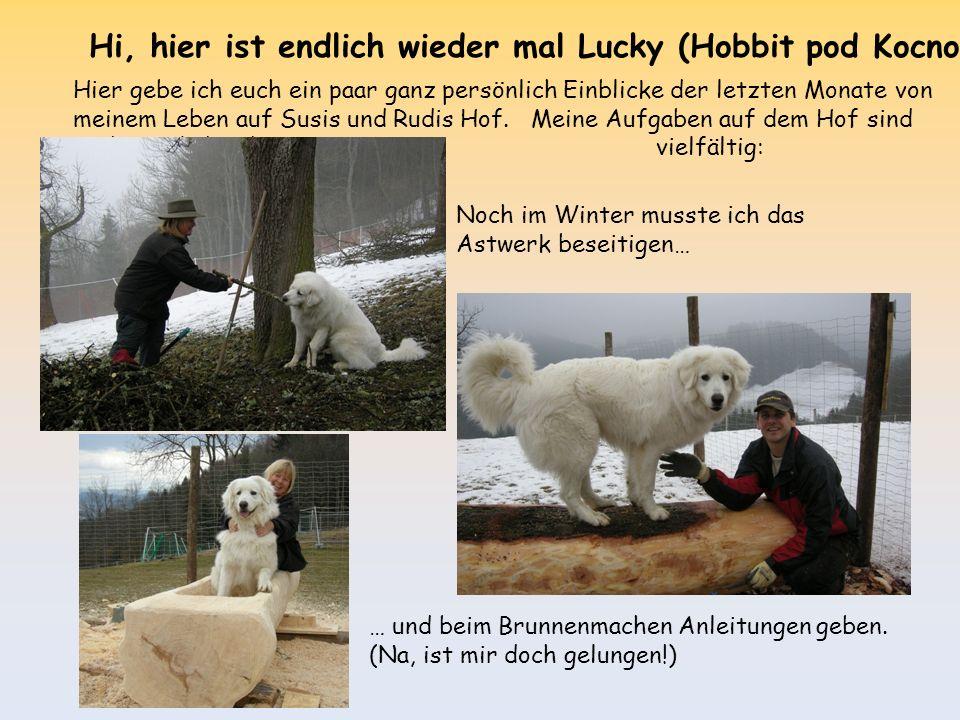 Hi, hier ist endlich wieder mal Lucky (Hobbit pod Kocno) Hier gebe ich euch ein paar ganz persönlich Einblicke der letzten Monate von meinem Leben auf Susis und Rudis Hof.