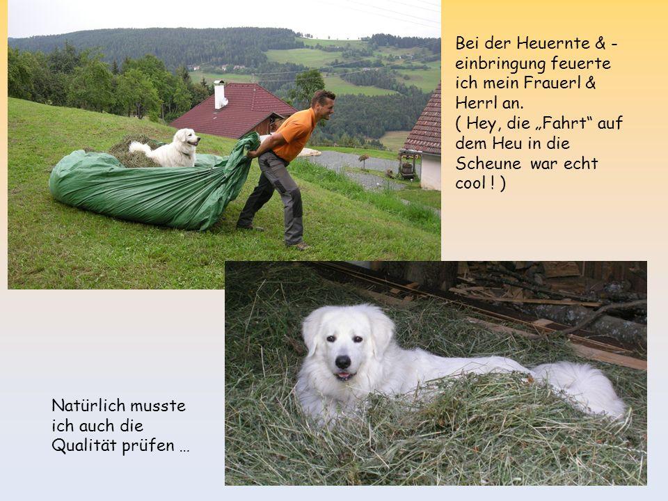 Im Sommer wanderte ich mit Frauerl & Herrl auf meinen ersten 2000er.