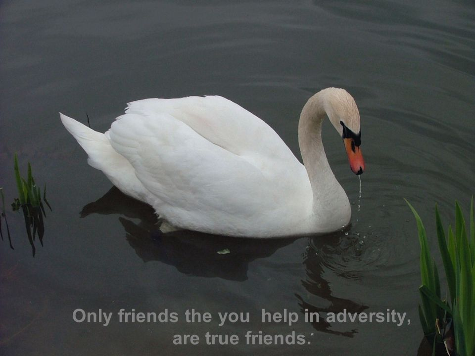 Only friends the you help in adversity, are true friends.