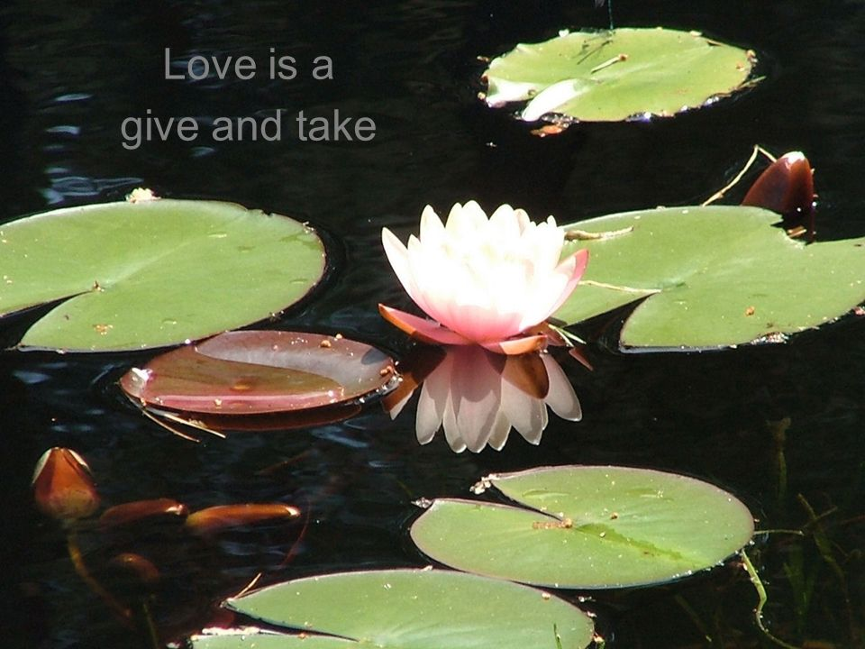 Love is a give and take