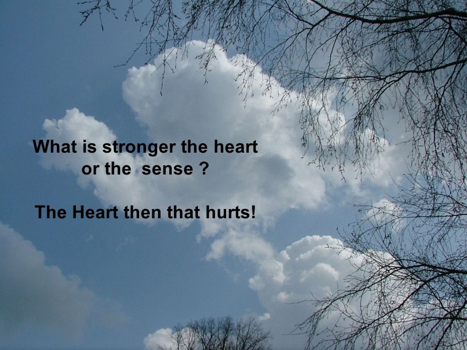What is stronger the heart or the sense The Heart then that hurts!