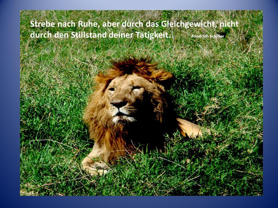 Leben heisst träumen. Weise sein heisst angenehm träumen. Friedrich Schiller