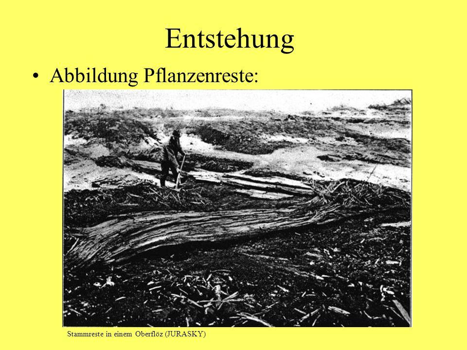 Entstehung Abbildung Pflanzenreste: Stammreste in einem Oberflöz (JURASKY)