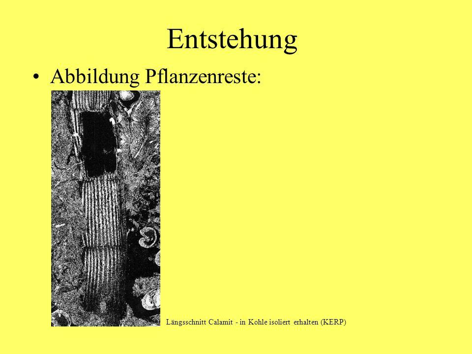 Entstehung Ursprung der Kohle: organ.Substanz (insbes.