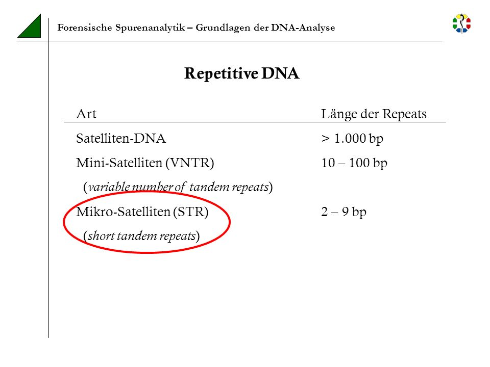 Forensische Spurenanalytik – Grundlagen der DNA-Analyse Repetitive DNA ArtLänge der Repeats Satelliten-DNA> 1.000 bp Mini-Satelliten (VNTR)10 – 100 bp
