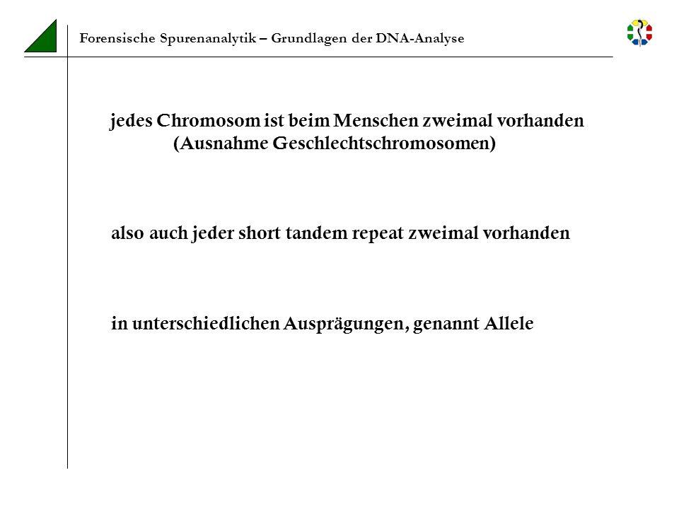 Forensische Spurenanalytik – Methodik Auswahl der in der Forensik genutzten STRs kleine Fragmentlängen (nicht mehr als 400bp) viele Allele bekannte, möglichst gleichmäßige Verteilung der Allele in der zu untersuchenden Bevölkerung bekannte chromosomale Lokalisation unabhängige Vererbung bekannte, möglichst niedrige Mutationsrate Hardy-Weinberg-Gleichgewicht