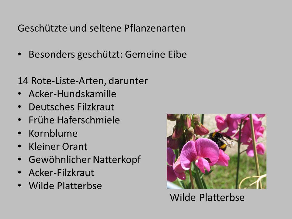Geschützte und seltene Pflanzenarten Besonders geschützt: Gemeine Eibe 14 Rote-Liste-Arten, darunter Acker-Hundskamille Deutsches Filzkraut Frühe Hafe