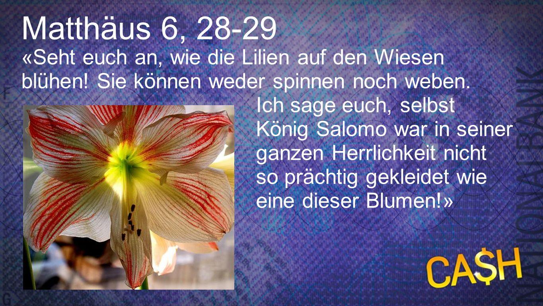 Matthäus 6, 28-29 «Seht euch an, wie die Lilien auf den Wiesen blühen! Sie können weder spinnen noch weben. Ich sage euch, selbst König Salomo war in