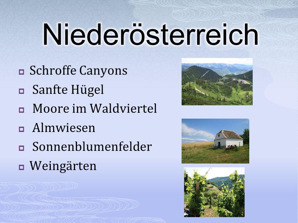 Schroffe Canyons Sanfte Hügel Moore im Waldviertel Almwiesen Sonnenblumenfelder Weingärten