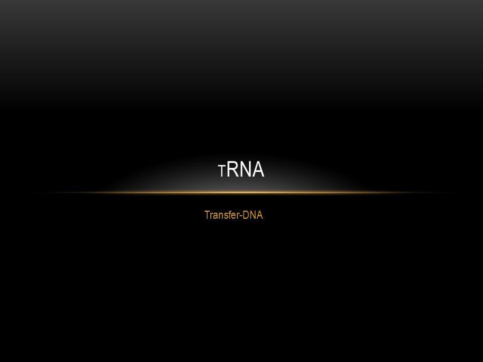 Transfer-DNA T RNA