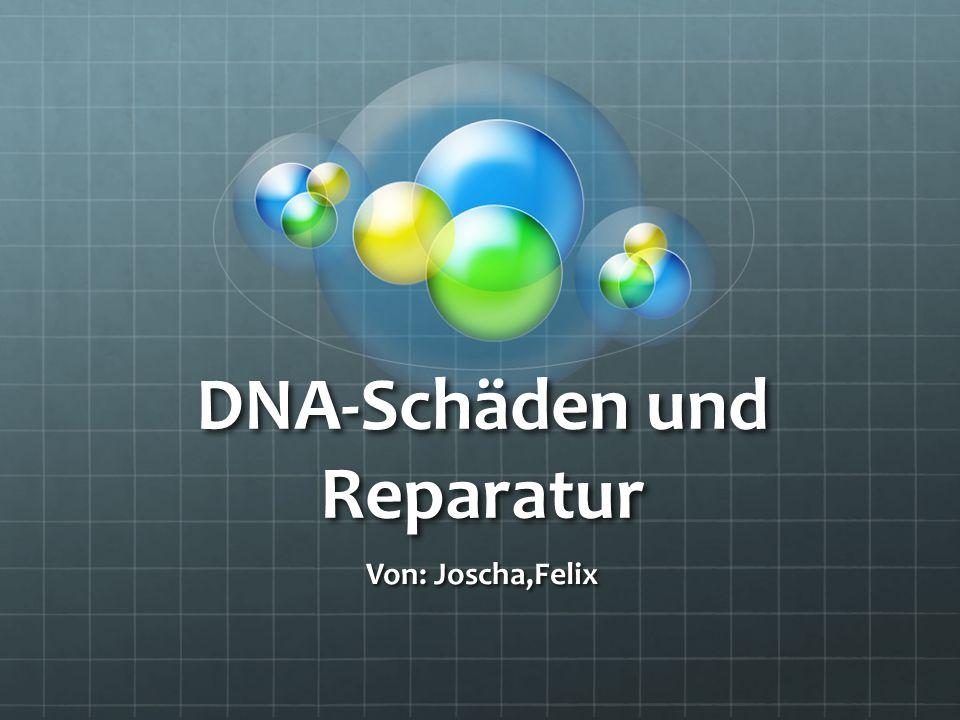 Gliederung DNA-Schäden =>Verursacher der Schäden =>Verlauf der Schäden DNA-Reparatur =>Typen der Reparatur =>Einzelheiten der Reparaturtypen Mutation Typen der Mutation Folgen der Mutation