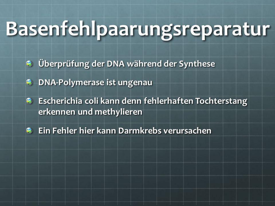 Basenfehlpaarungsreparatur Überprüfung der DNA während der Synthese DNA-Polymerase ist ungenau Escherichia coli kann denn fehlerhaften Tochterstang er